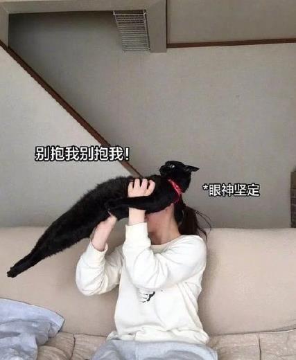 钢铁直猫表情包分享